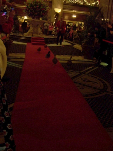 They even get a red carpet.