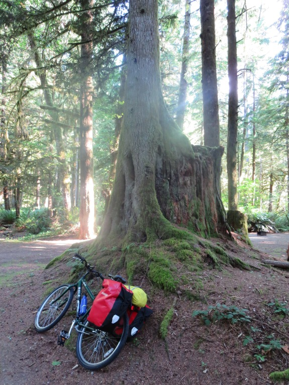 British Columbia trees